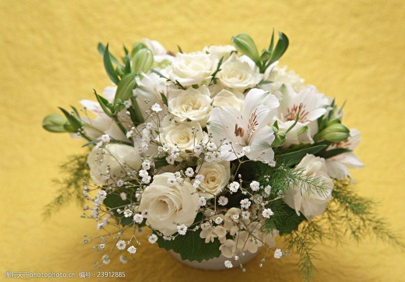 白色月季鲜花