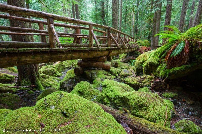 树林里的木头桥图片