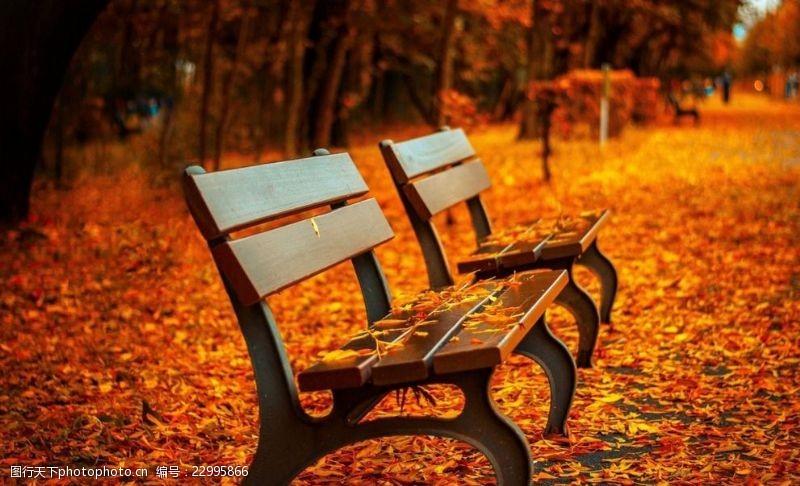多彩的树木秋天椅子