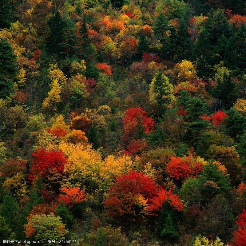 多彩的树木图片
