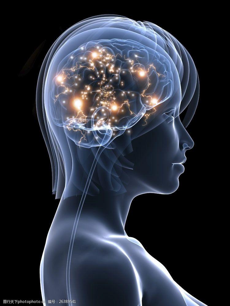 女人大脑女性大脑神经图片