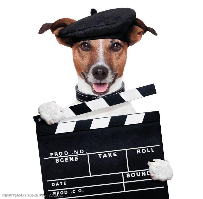 拍电影拿着报幕牌的狗图片