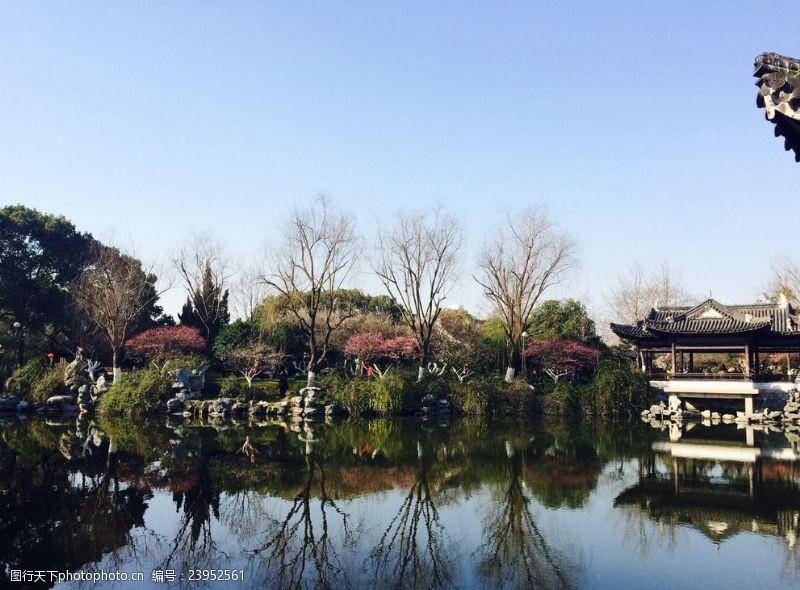 树木葱茏月湖梅花