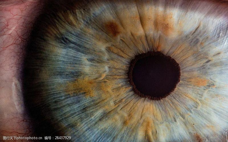 眼部特写眼睛瞳孔高清
