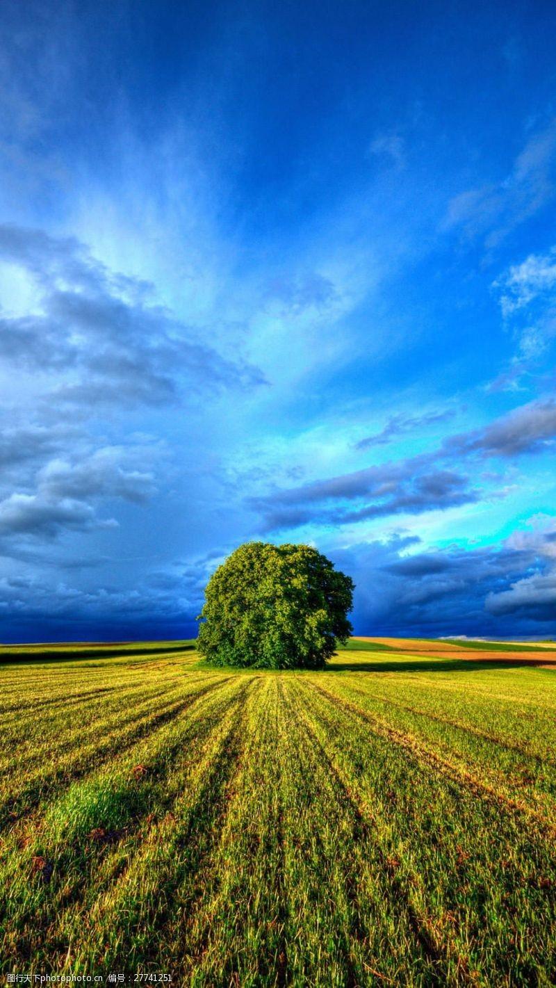 风雨无阻独特的一棵树