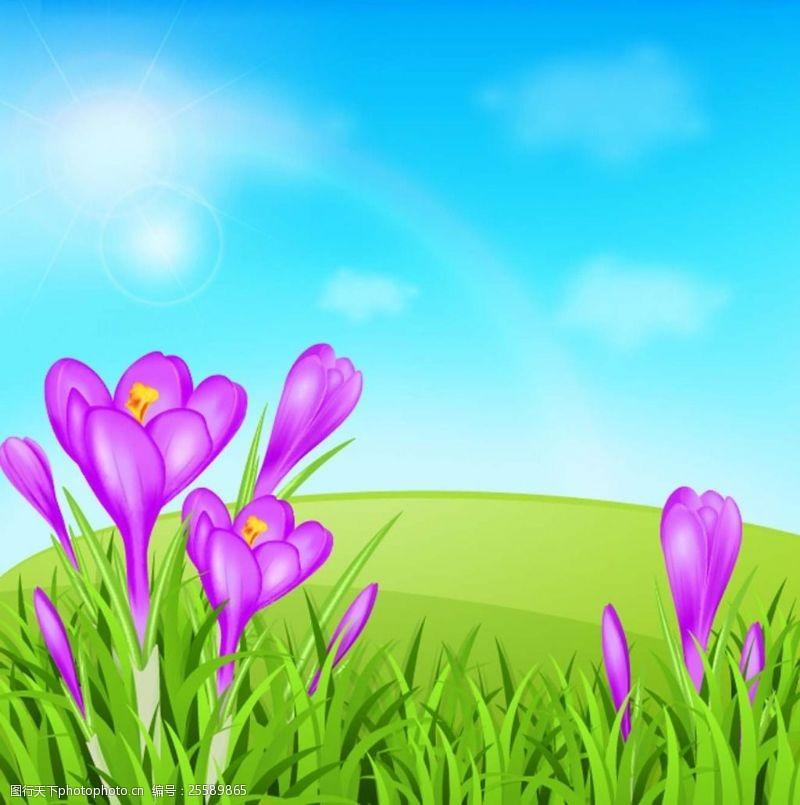 草地蓝天花朵蓝天下的花朵