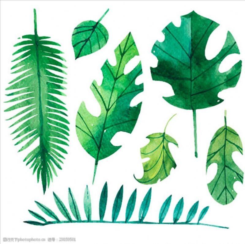 夏季风情矢量素材各种各样的水彩棕榈树叶