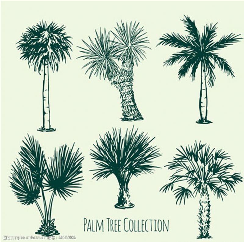夏季风情矢量素材几款棕榈树草图