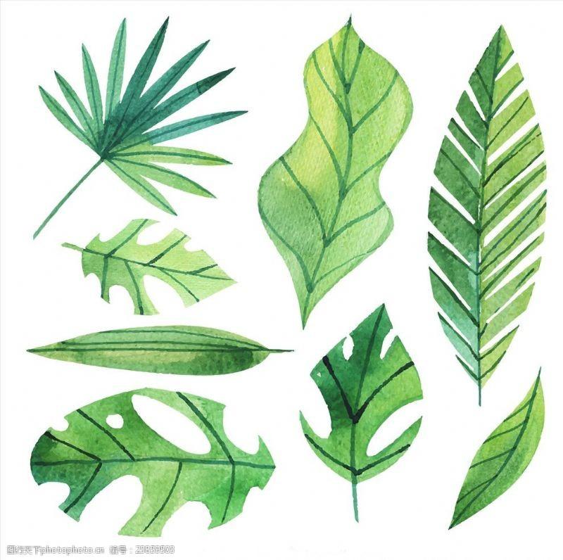 夏季风情矢量素材手绘水彩棕榈树叶