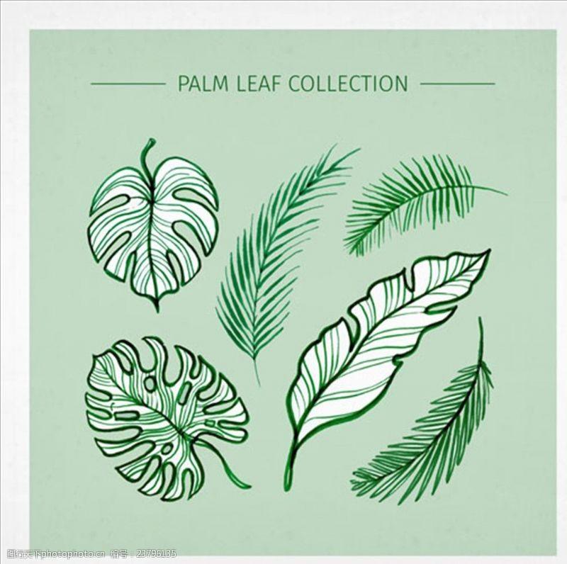 夏季风情矢量素材多样的绿色棕榈叶