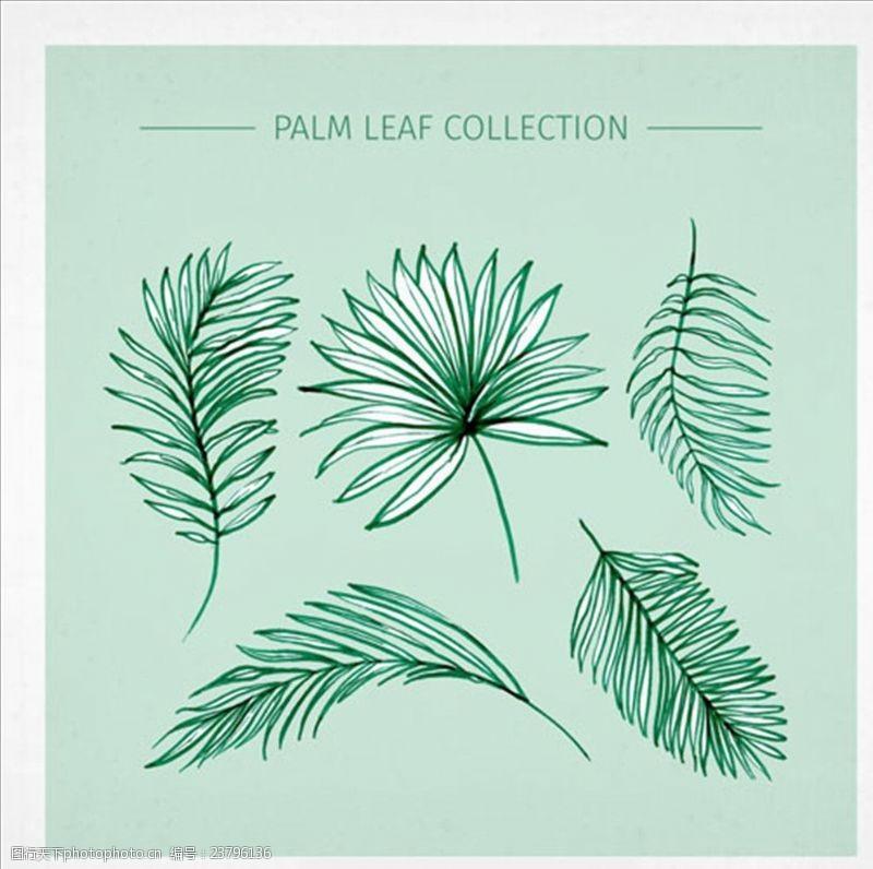 夏季风情矢量素材多样的棕榈叶