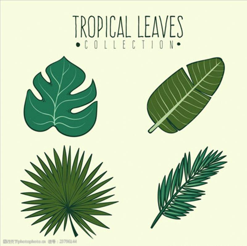 夏季风情矢量素材四款绿色棕榈叶