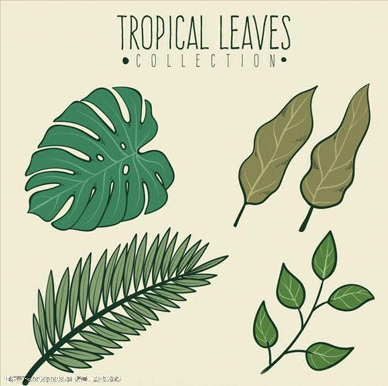 夏季风情矢量素材四款手绘绿色棕榈叶
