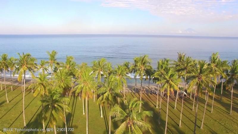 beach越过棕榈树和Beach