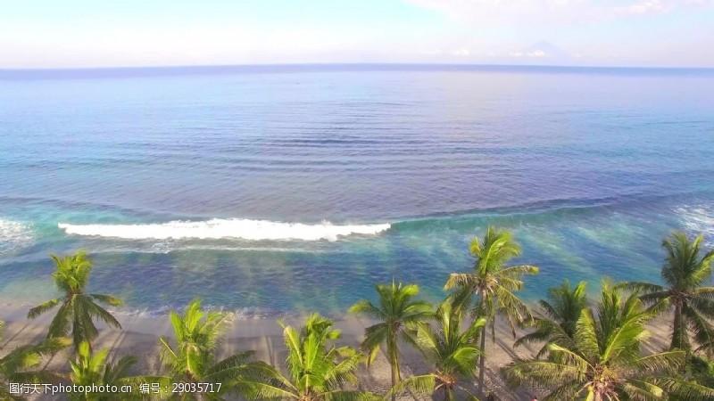beachBeach棕榈树上的树