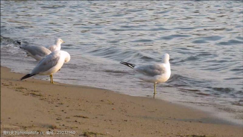 beach海鸥在Beach