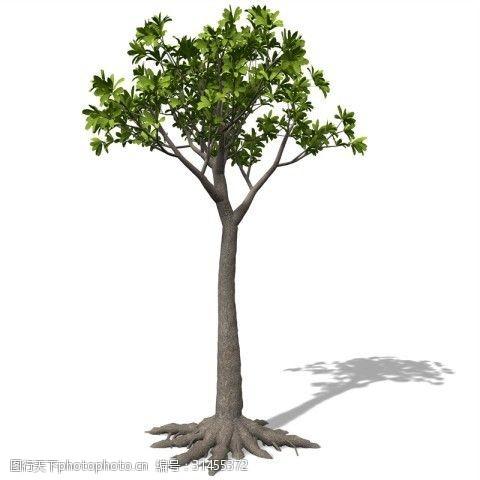 花草模型大树植物3d模型