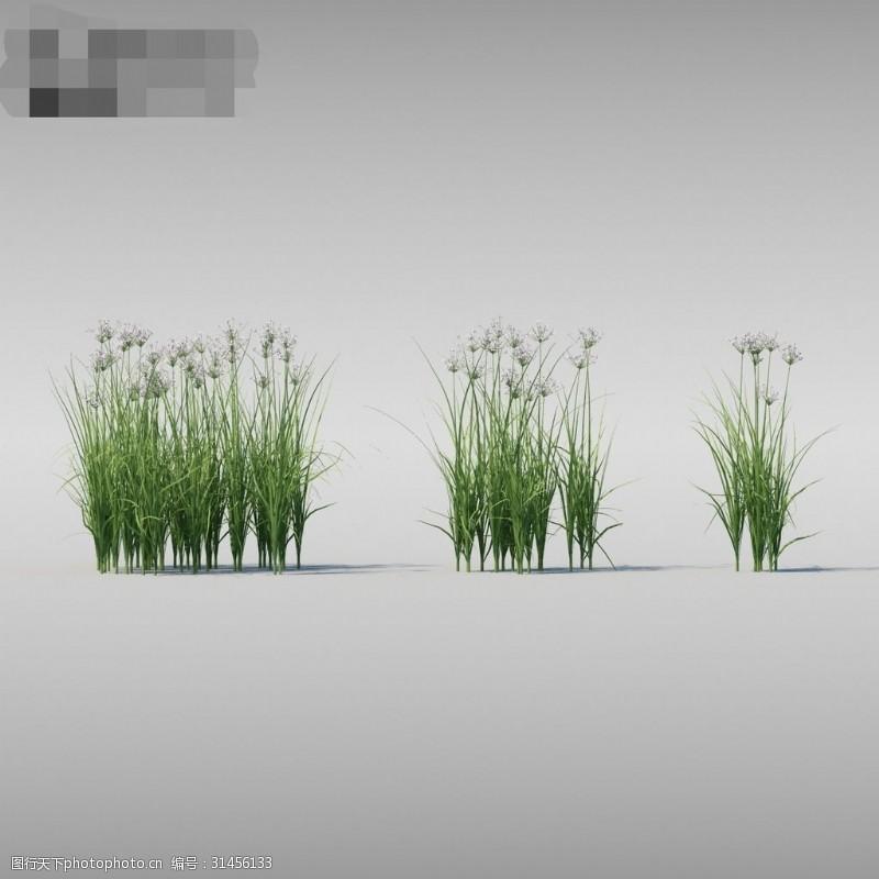繁密花草模型