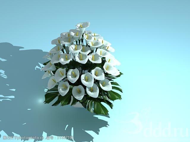 绿植小花flowers