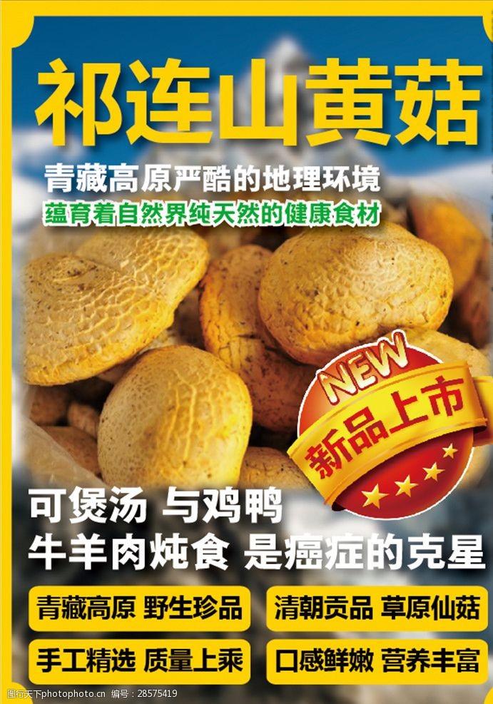 祁连山黄菇A4